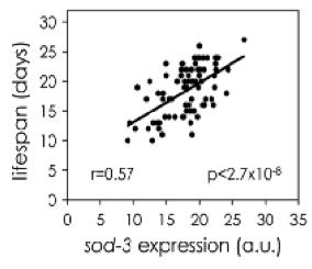 Correlation of sod-3 gene (best single correlation) expression to worm lifespan